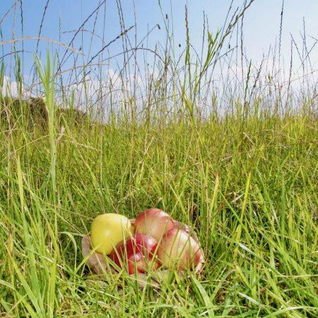 equi-feed.de-Nadine-Hausmann-Futtermittel-Apfel