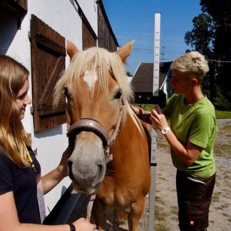equi-feed.de-Nadine-Hausmann-Pferdewaage-Stockmaß